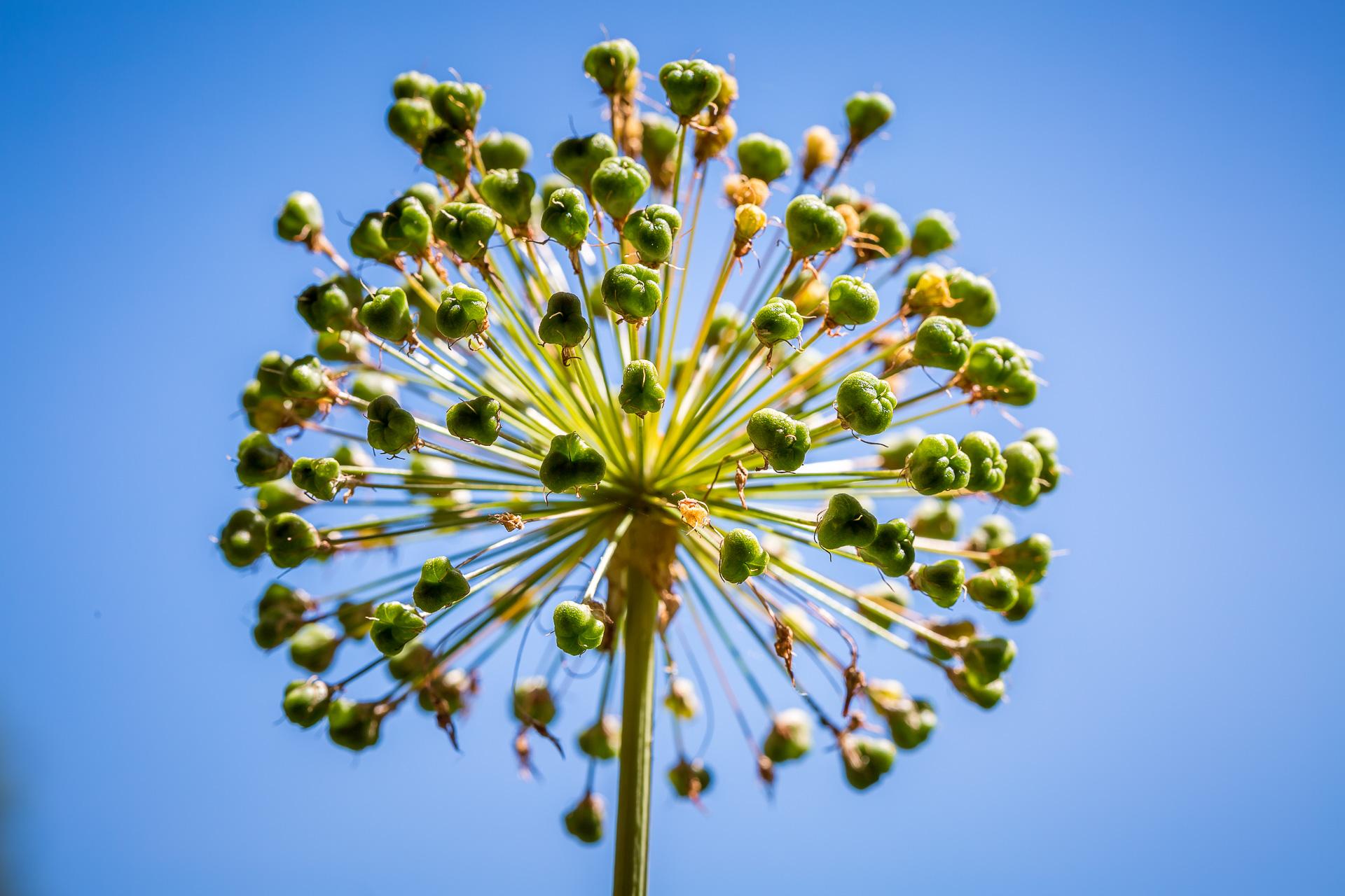 flowers macro blue sky